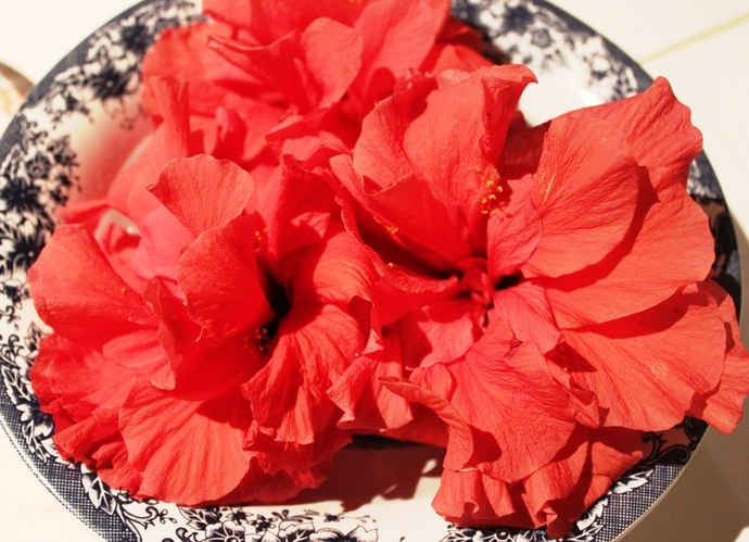 Fresh Hibiscus Cordial Recipe Recipeyum