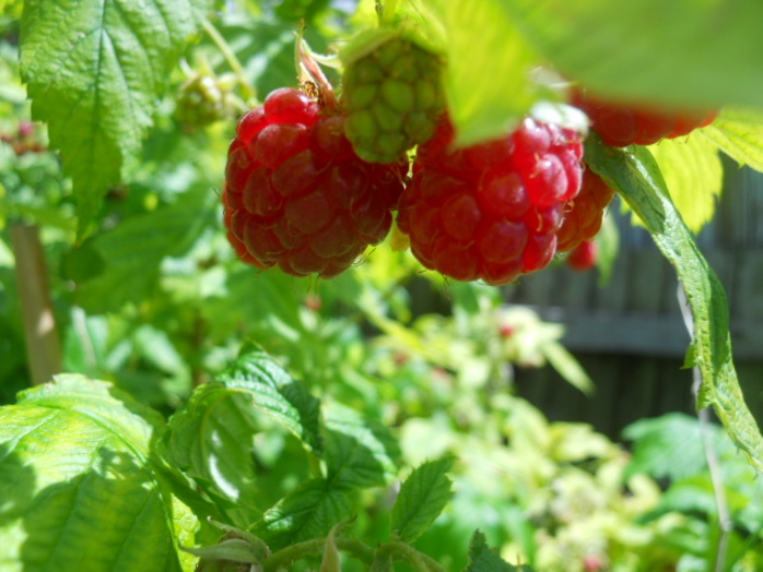 raspberries, raspberry jam